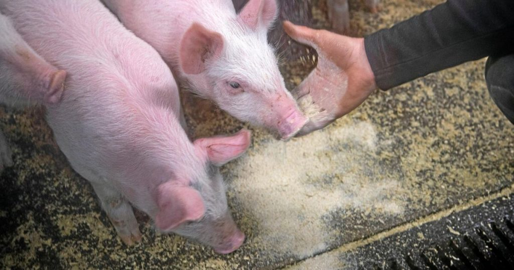 Swedish Board of Agriculture on the lack of veterinarians