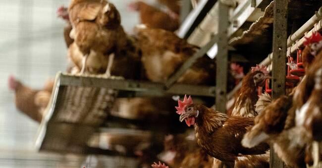 Alerts about bird flu in Europe