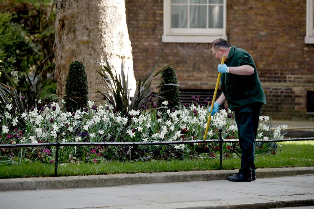 A gardener on Downing Street in London where the Prime Minister's House is located on Tuesday.