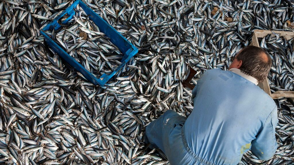 The European Union and the United Kingdom agree to fish
