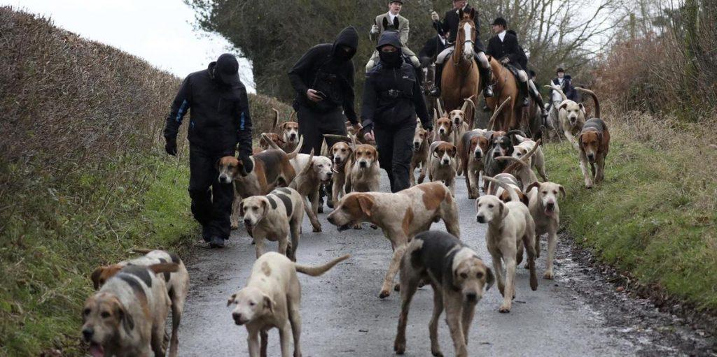 Britain recognizes animals as sentient beings
