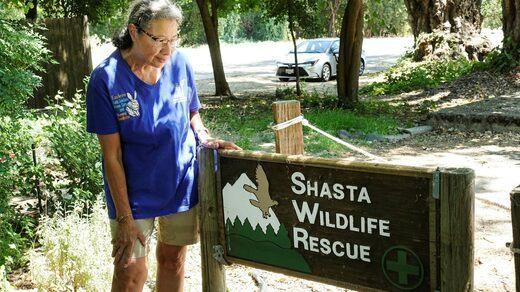 Karleen Stoker, a volunteer at the Shasta Game Shelter.