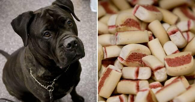 Researchers warn: antibiotic-resistant bacteria in raw dog food