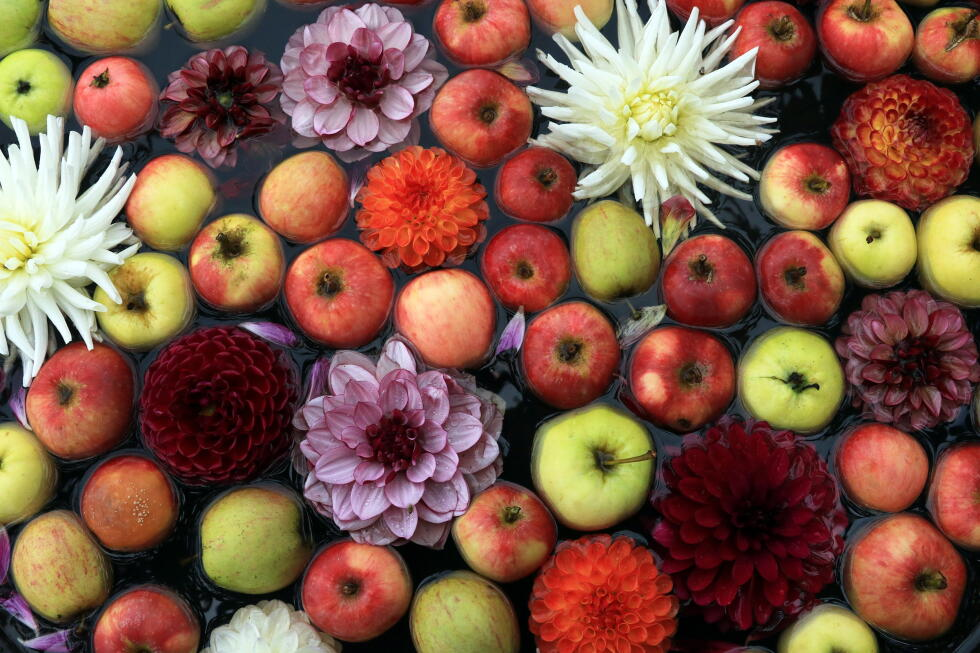 This year's Sofiero Castle Park gardens are filled with apples and dahlias.