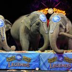 Closing of the Ringling Brothers Circus |  Foreigner