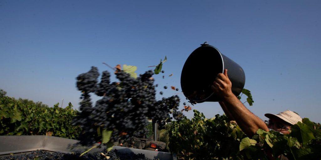 Poor working conditions in Italian vineyards