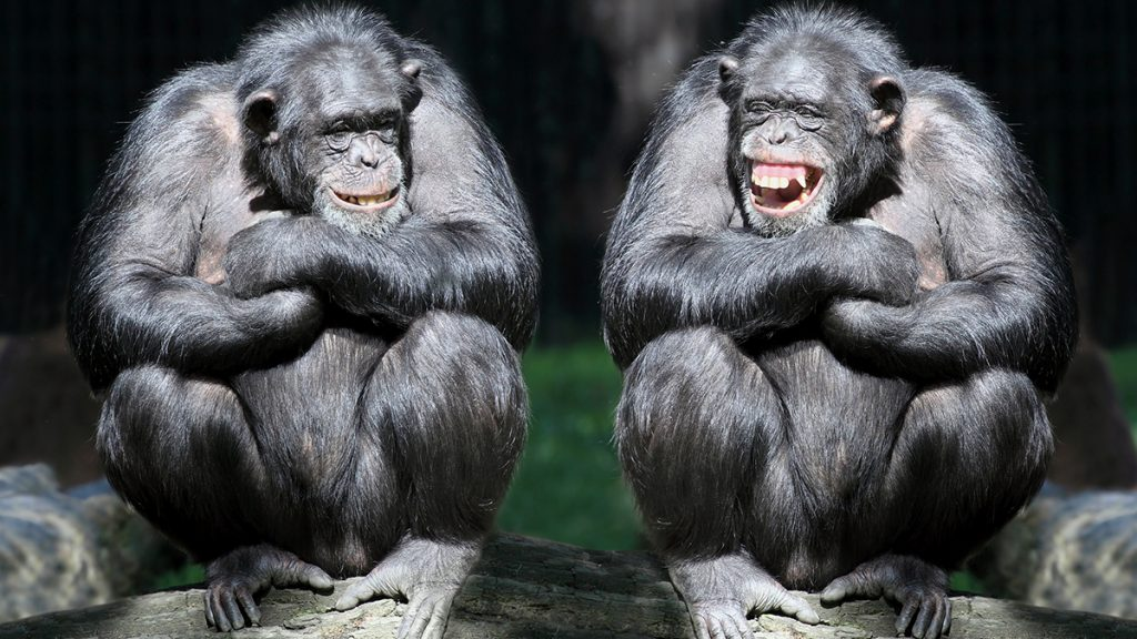 'Junk DNA' explains the difference between humans and chimpanzees -