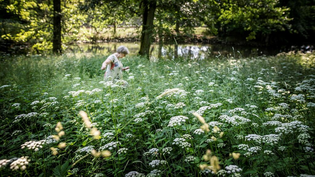 More green space in cities leads to fewer deaths